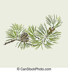 Pine branch with snow and pine cone