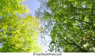 Road trip through the sunny forest low angle shot