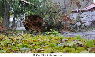 Fallen tree trunk damaged by wind storm on the road