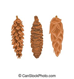 Four pine cones larch cones vector illustration