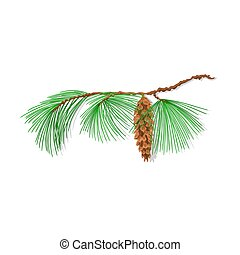 Branch mountain Pine - Branch of Christmas tree mountain...