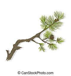Mountain Pine branch - Branch of Christmas tree mountain...