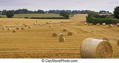 Straw bales in a farm field