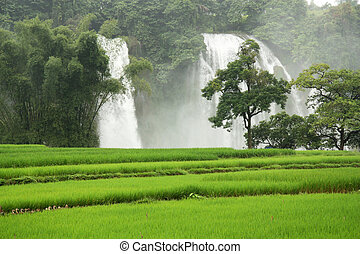 Ban Gioc Waterfall with rice field - Amazing Ban Gioc...