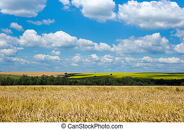 beauty green summer rural landscape on blue sky backgrounds
