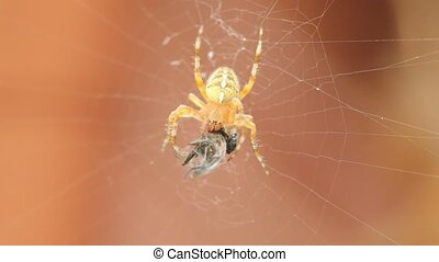 Close up of spider