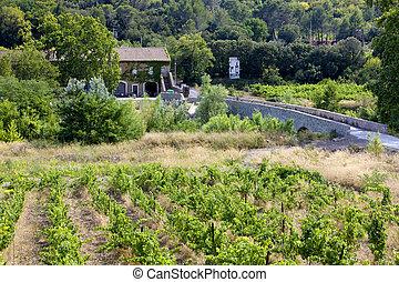 vineyard at Portel-des-Corbiere, Languedoc-Roussillon,...