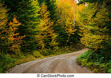 Autumn color along a dirt road in White Mountain National...