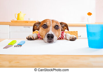 hungry dog - jack russell dog sitting at table begging to...