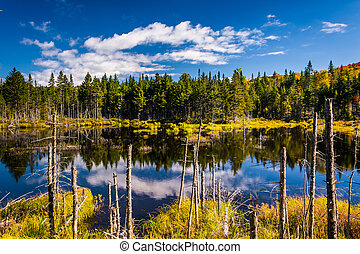 Marshy pond in White Mountain National Forest, New Hampshire...