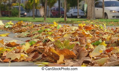 Autumn city scene with fallen leaves on a sidewalk