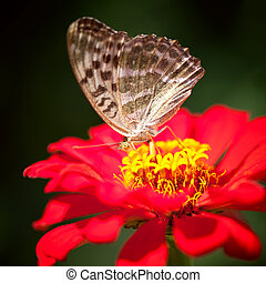 Butterfly sitting on a red flower in the darkness