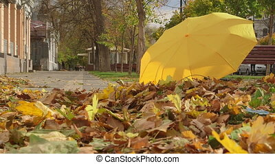 Autumn colors in the city