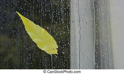 Autumn yellow leaf on a window glass in drops of rain...