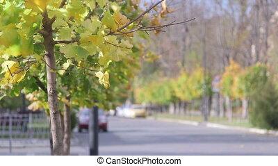 Quiet city street in autumn
