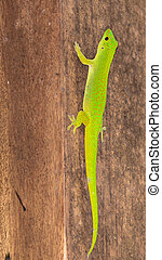 lizard with brown eyes - bright green lizard with brown eyes...