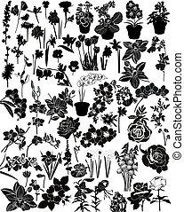collezione, di, flowers, ,