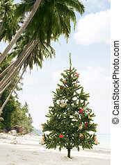 tropic x-mas - view of Christmas tree on wild empty tropical...