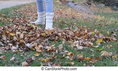 Raking tree leaves in fall garden