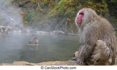monkey is relaxation for adv or others purpose use