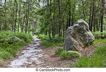 caminho, floresta,  Fontainebleau
