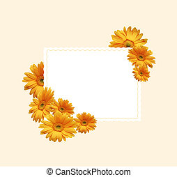 Chrysanthemums - White sheet for an inscription with yellow...
