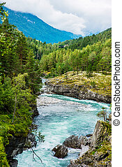 River in Norway - Rapid river runs among the trees in Norway