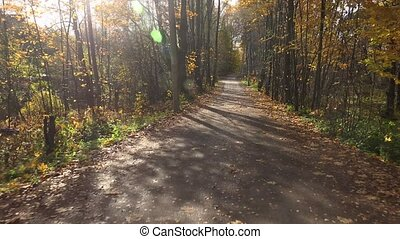Autumn forest Travel by car on the road in the fall 4K -...
