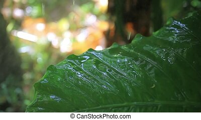 Close up of water drops on the green plants. 1920x1080