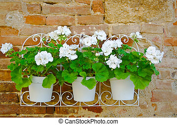 Flowers on a wall closeup - Closeup view of white flowers...