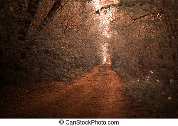 infrared photo of road lined with oak trees