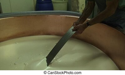 Making cheese: Cheese maker inspects curd mass in copper...