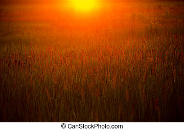Spring or summer abstract nature background with grass in...