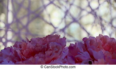 Pink flowers on background of decorative cobwebs, close-up
