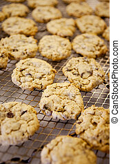 Fresh Chocolate Chip Cookies - Freshly backed chocolate chip...