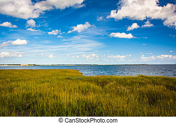 Marsh grasses at the Waterfront Park, in Charleston, South...