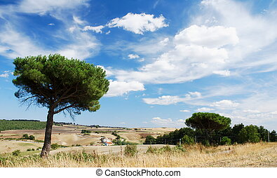 Mediterranean landscape with parasol pine trees and moody...