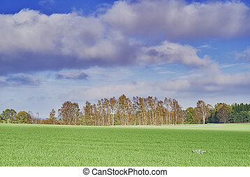 Agricultural landscape - Autumn view of the agricultural...