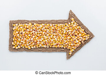 Pointer with corn  grains, on white background