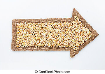 Pointer with barley grains, on white background