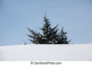 Treetop - The top of a cedar tree peeking out above a snow...