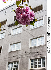 flowering tree and building - a flowering tree in front of...