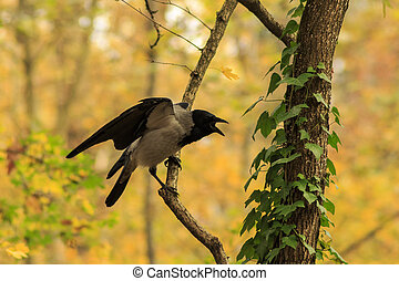 Crow on branch spread its wings