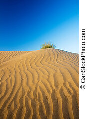 Sand dune with a bush on the top