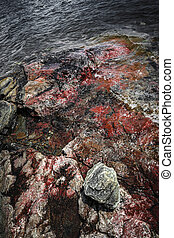 Georgian Bay rocks - Closeup of colorful rocks at rugged...