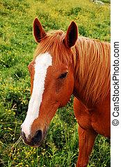 caballo, cara