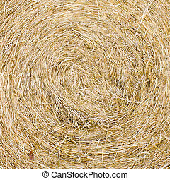 Straw texture background, close up