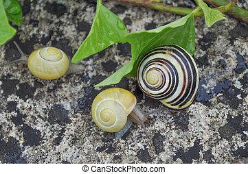 Slug snail terrestrial gastropod mollusc animal