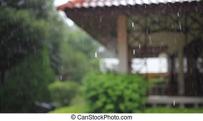 Terrace house, trees in the rain. Change focus with blurred...