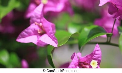 Close up of pink flowers on nature background. 1920x1080